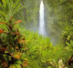 Hiking at Akaka Falls